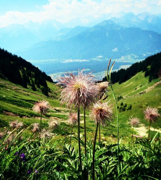 #gipfelstürmer #hiking #flowers #blumentraum #wanderlust #mountains #mountainlove #peak #nature #naturelovers #panorama #viewoftheday #outdoor ...