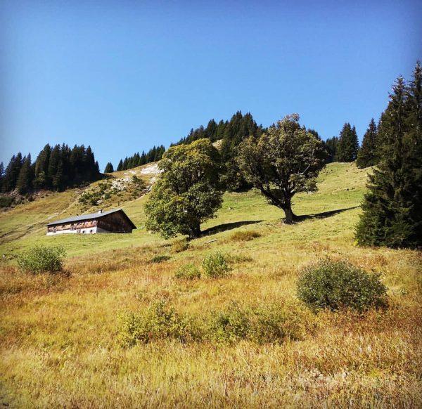 #sibratsgfäll #sättele #bregenzerwald #vorarlberg #austria #nature #landscape #autumn #alp #trees #meadow #beautifulday #home ...