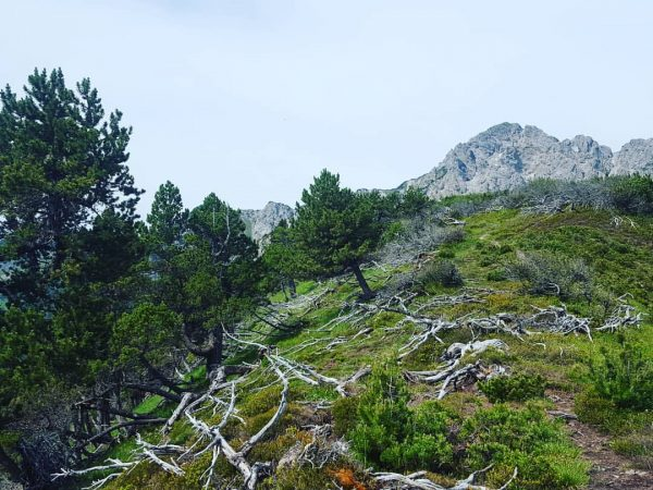 Lohnspitz⛰🌲🌳🌱🍃 . . . . #lohnspitz #gurtis #frastanz #frastanzer #vorarlberg #totholz #gampalpe #hikingoutside ...