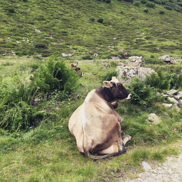 #vergalden Alpe Vergalden
