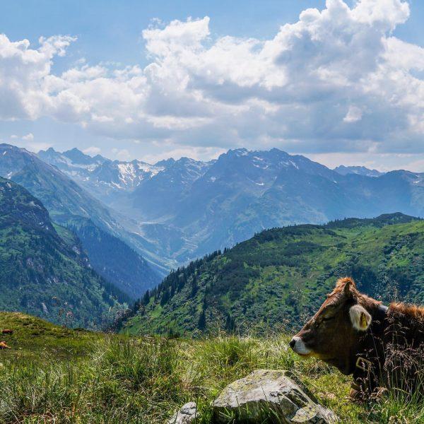 Blick in Richtung #vermuntstausee und #silvrettahochalpenstrasse. #montafon #silvrettamontafon #alps #zeinisjoch #meinmontafon #greenhornontour #wanderlust ...