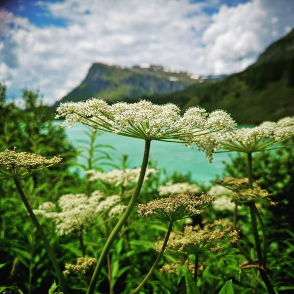 Alpenparadies. 🗻🌿🌺 #safetheplanet #naturschutz #alpen #alpenparadies #bergliebe #alpensommer #alpenflora #schönewelt #wonderfulworld #bergsommer #kopssee ...