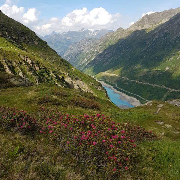 #山歩きの記録 4 最終回 やっと!出発地点の湖が見えてきました😭 終わりに近いとはいえ、 #アルペンローゼ がまだまだ咲いていて、ピンク色が緑に映えて綺麗でした。 最後の下り道は足の疲労感が半端なく、精神的にもしんどかったです💦 もちろん次の日は筋肉痛😅 とにかく無事に帰ってこれて良かった。 #wandern #hochmaderer #vermuntstausee ...