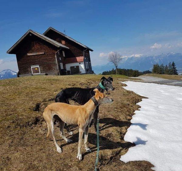 Alpengasthof Peterhof Furx