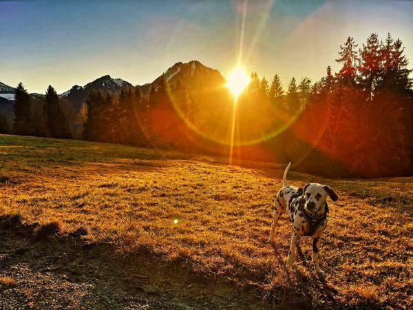 Wanderung zur Gschwend Alpe #wandern #dalmatiansofinstagram #dog #hund #dogstagram #instadog #dalmatian #dalmatiner Kehlegg, ...