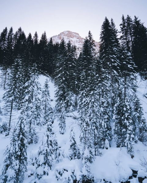 I took this picture during a walk in a snowy valley in Vorarlberg. ...