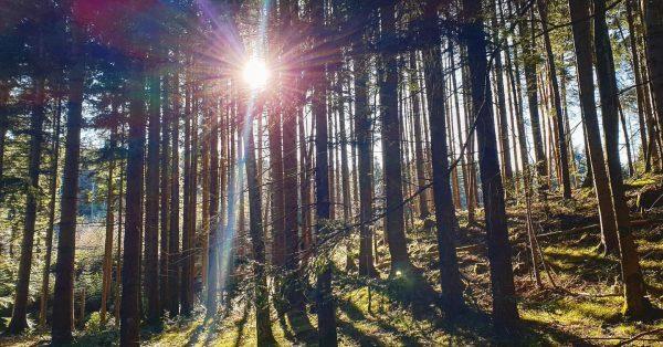 #sonnenaufgangimwald #göfis #hohersattel #rausundmachen #andiefrischeluft #weilfotografierenspassmacht #waldspaziergang #waldliebe Göfis, Vorarlberg, Austria