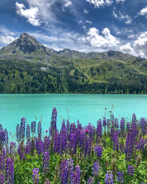 #zeinisjoch #gaschurn #voralberg #montafon #austria #🇦🇹 #lake #flowers #violet #hiking #hikingadventures #sky #clouds ...