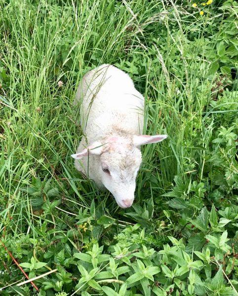 #seenonmyrun #babysheep #sheep #dornbirn Rappenlochschlucht