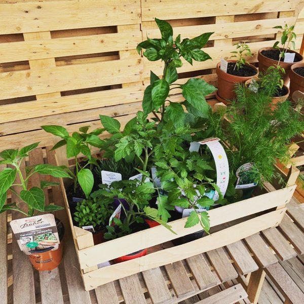 Wir haben ein bisschen Nachschub für unseren Naschgarten besorgt😊 wir essen und kochen ...