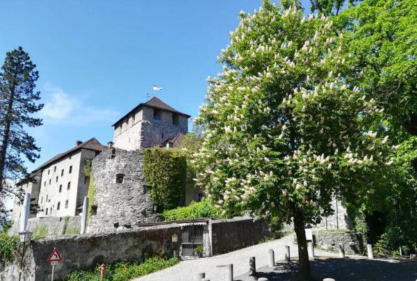 Komm lieber Mai und mache 🌳 wieder grün. ☀️ Grüße und einen schönen Sonntag 🏰⚔️ #schattenburgmuseum #schattenburgfeldkirch...