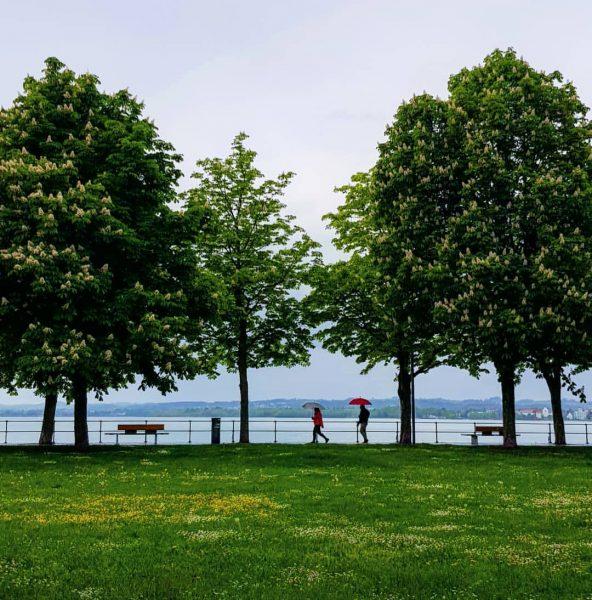 Rainy day... So what? 😍 . . #bregenz #vorarlberg #austria #bodensee #lakeconstance #lake ...