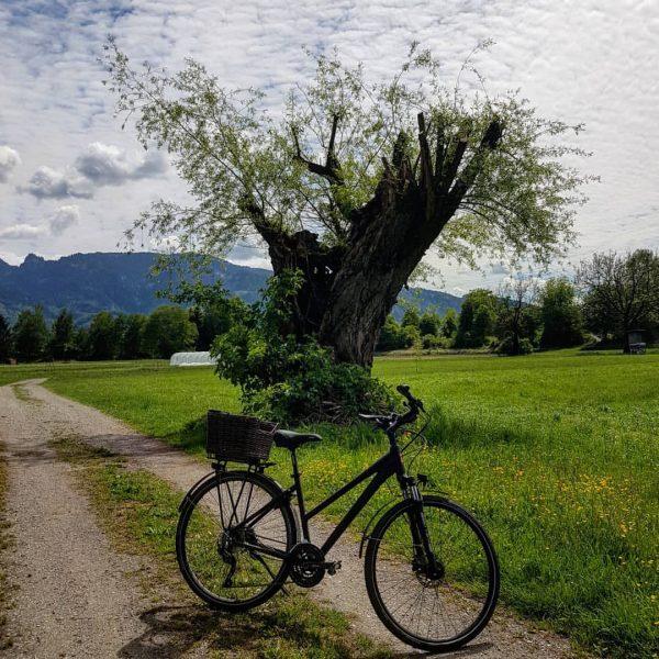 . #ländle #lustenau #spring #frühling #frühlingsgefühle #vorarlberg #austria #bikeride #weekend #wochenende #fahrrad #bike ...