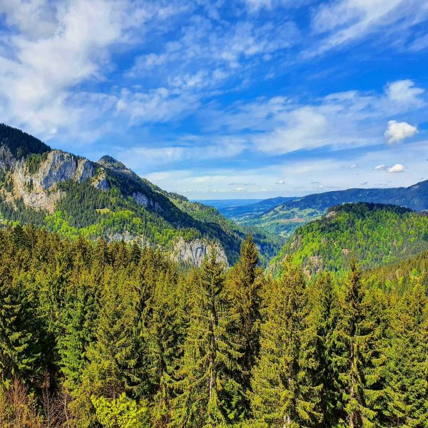 #vorarlberg #austria #hiking #wanderlust #ebnit #sattelalpe #berge #wandern #outdoorphotography #dornbirn #firstgebiet #mörzelspitze #outdoorlife ...