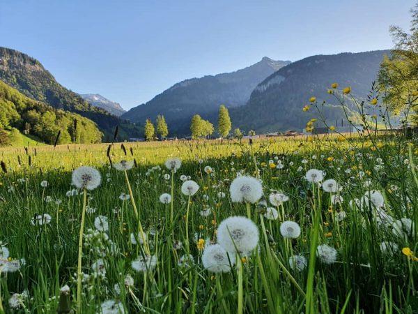 Ein herrlicher Spaziergang von Bad Reuthe nach Bezau 😍 #spazieren #natur #wundervoll #tollestimmung ...