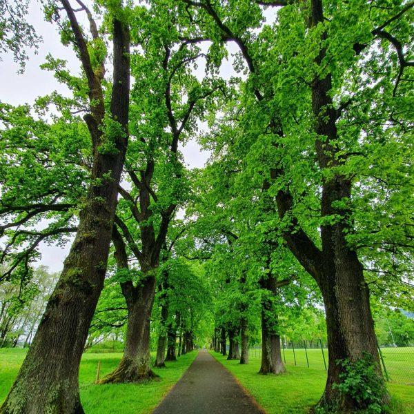 #mehrerau #bregenz #vorarlberg #austria🇦🇹 #bodenseeliebe #bodensee #lakeofconstance #naturliebe #nature #naturlovers #spaziergang #genießen #auszeit ...