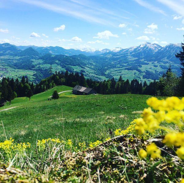 Home sweet home 🌲🌳🌼⛰ #mountainlove #hiking #sundaybliss #austria #vorarlberg #brüggelekopf #sonntagsausflug Brüggelekopf