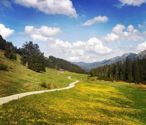 #hochhäderich #bregenzerwald #vorarlberg #austria #nature #landscape #spring #mountains #trees #meadow #dandelions #alpinecabin #path ...