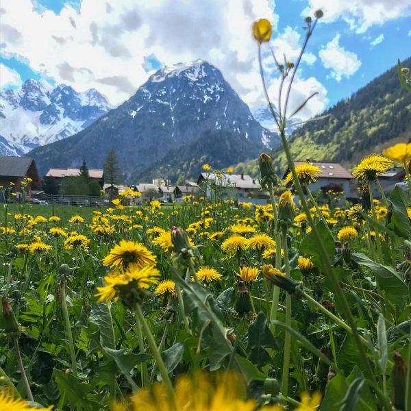 Habt ihr schon Sehnsucht nach den Bergen? #traumhaftschön #berge #brand #brandnertal #traumurlaub #sommer ...