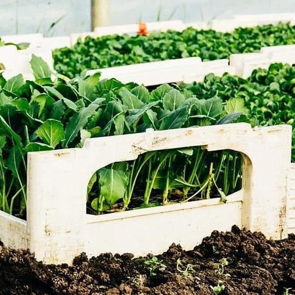 LIEBE AGRONAUTEN - SAVE THE DATE unsere Jungpflanzenwochen am Vetterhof beginnen diesen Freitag! ...