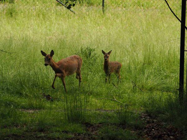 Aus aktuellem Anlass bitten wir alle Besucher*innen darum, junge Wildtiere im Wald nicht ...