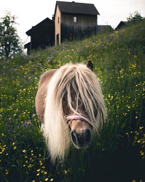 Have a nice Sunday 👍 • • • @lightroom @visitaustria @all_animals_addiction @animalelite @animalplanet ...