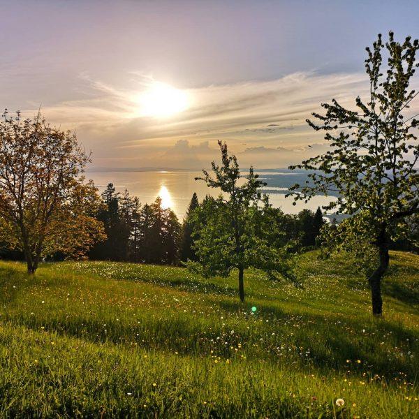 Usflug ufam Berg hinterm Hüsle.. Oder so.. #bregenz #lochau #xiberg #hausberg #pfänder #bodensee ...