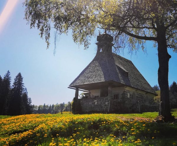 #bödele #bregenzerwald #vorarlberg #austria #nature #landscape #outdoor #spring #bluesky #meadow #dandilions #yellow #plants ...