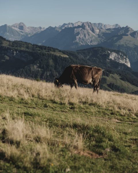 Wir sind ja der Meinung, dass der Bregenzerwald immer eine Reise wert ist. Darum freuen wir uns...