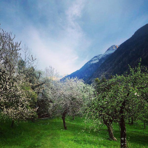 Einen schönen Tag noch! Have a nice day! #montafon #schruns #vorarlberg #alpe #berge ...