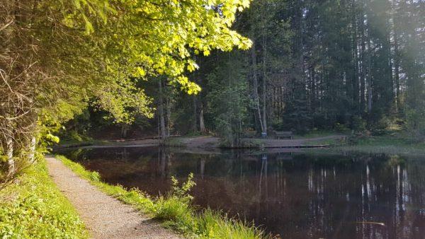 Ich kam. Ich sah. Die spiegelnde Wasseroberfläche am Bödelesee😌🏞 #venividivorarlberg . Wandertipp🥾: Vom ...