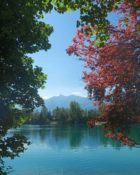 Природный занавес ☺️☺️☺️ #rankweil #brederis #paspels #see #spring #naturliebe #vorarlberg Rankweil, Austria