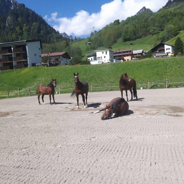 Ich kam. Ich sah. Pferde 🐴❤ #venividivorarlberg #deutschesreitpony #alpenrosebrand #brandnertal #urlaubambauernhof #visitvorarlberg #reitpädagogik
