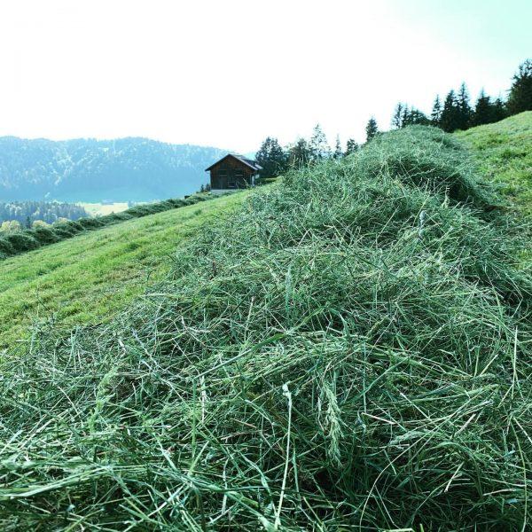 """""""Landwirtschaft in Hittisau"""" Bestes sonnengetrocknetes ☀️🌾🚜 Heu. Die Heumilchkühe 🐄🐄 unserer Bauern werden ..."""