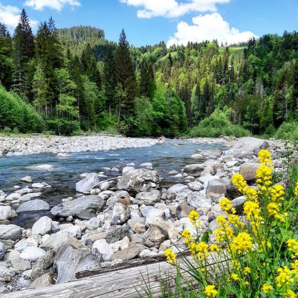an der Rubach - Natur pur #meinsibratsgfäll #bregenzerwald #venividivorarlberg Sibratsgfäll, Vorarlberg, Austria