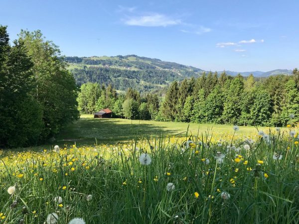 #may just is my favourite month 🌿🌱 #spring #hiking #green #meadows everywhere #bregenzerwald ...