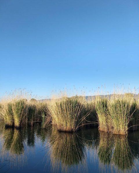 🐦unterwegs am Wasser.... . #amwasser #amsee #blauersee #amwasseristesamschönsten #schilf #schilfgras #spiegelungen #bluelake #blusky ...