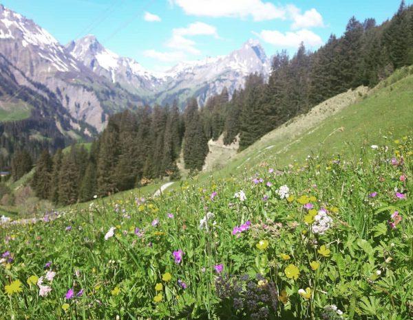 Pure nature picture #berghofschroecken #schröcken #warthschröcken #picture #nature #naturalliving #healthy #life #liveisbetterinthemountains #atemderberge ...