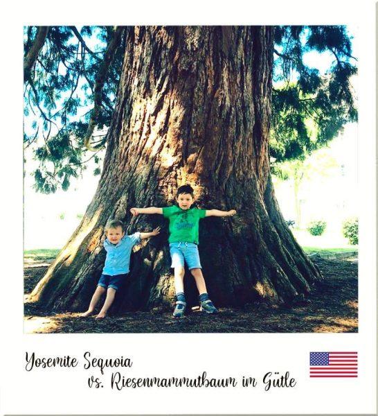 Die Wälder und ihre Bäume... 😉 #reiseumdiewelt #sequoianationalpark #mammutbaum #hugtrees #venividivorarlberg #gütledornbirn #bigtrees ...