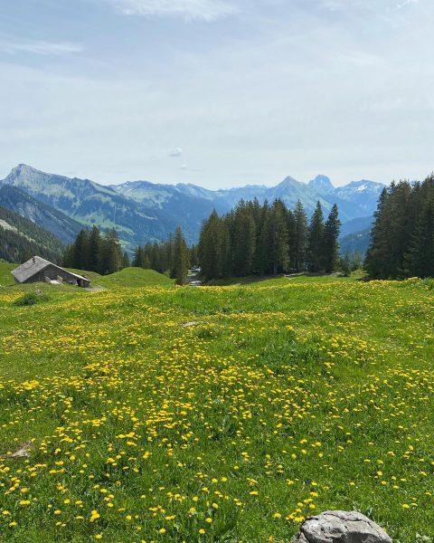 Bergerlebnisse hautnah! 🥰⛰ #bergwandern #kanisfluh #wandern #natur #naturpur #blumenwiese #aussicht #berge #sommerurlaub #urlaubindenbergen ...