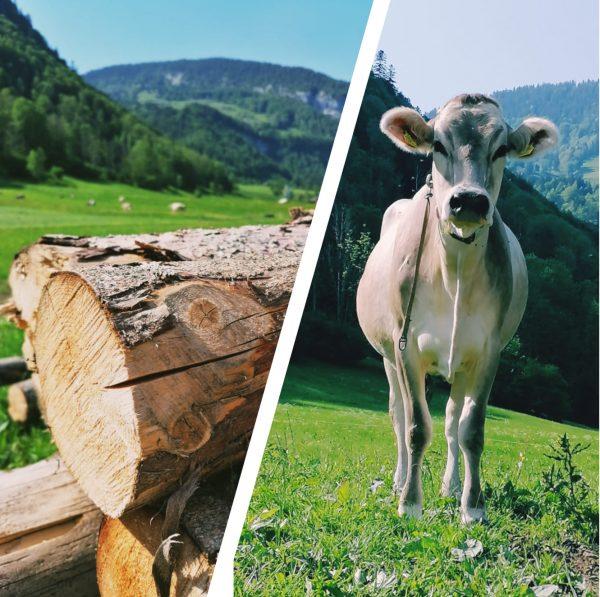 Ich kam. Ich sah. Die Landwirtschaft 🐂🐄🐔🌱🥛🥚 #venividivorarlberg #visitvorarlberg
