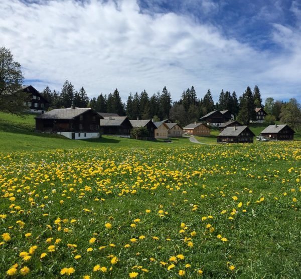 The meadows of Bödele 🌼🌿 #springvibes #venividivorarlberg #visitvorarlberg Bödele