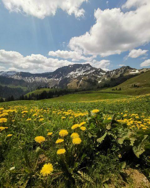 Blick auf den #freschen - Berglauf am 21. Mai 2020 von Dornbirn nach ...