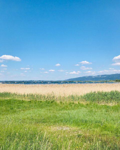 Sommertage am Bodensee... Bei traumhaftem Sonnenschein waren wir gestern mit dem 🚲 am ...
