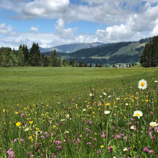 Ich kam. Ich sah. Eine superschöne bunte Blumenwiese #visitaustria #visitvorarlberg #sibratsgfäll #bregenzerwald #naturelovers #katharinahof_sibra Sibratsgfäll, Vorarlberg, Austria