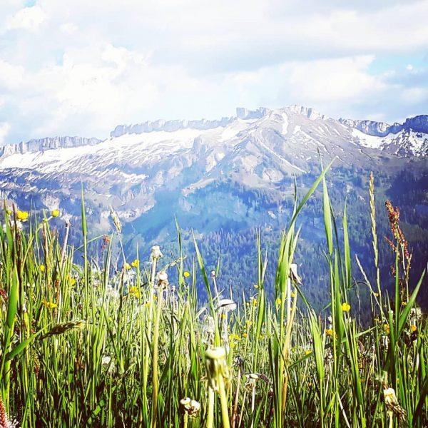 #natur #meinsibratsgfäll #sibra #bregenzerwald #venividivorarlberg #genießen #wohnenwoandereurlaubmachen