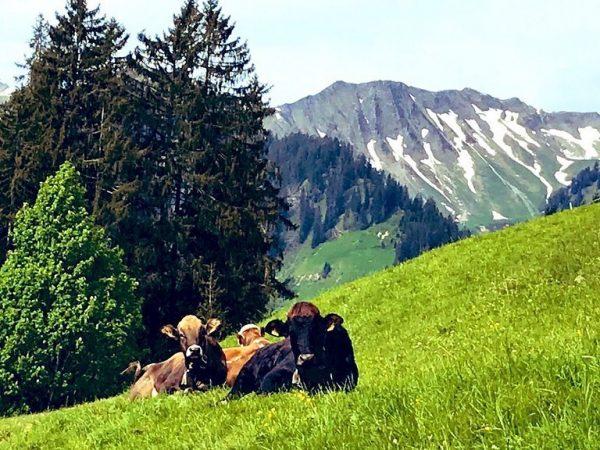 Wandern von #Mittelberg nach #Baad. Kaffee und Kuchen beim Starzelhaus und zurück den ...