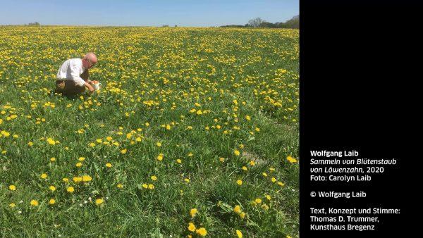 KUB Sonic Views 21: Wolfgang Laib, Sammeln von Blütenstaub von Löwenzahn, 2020