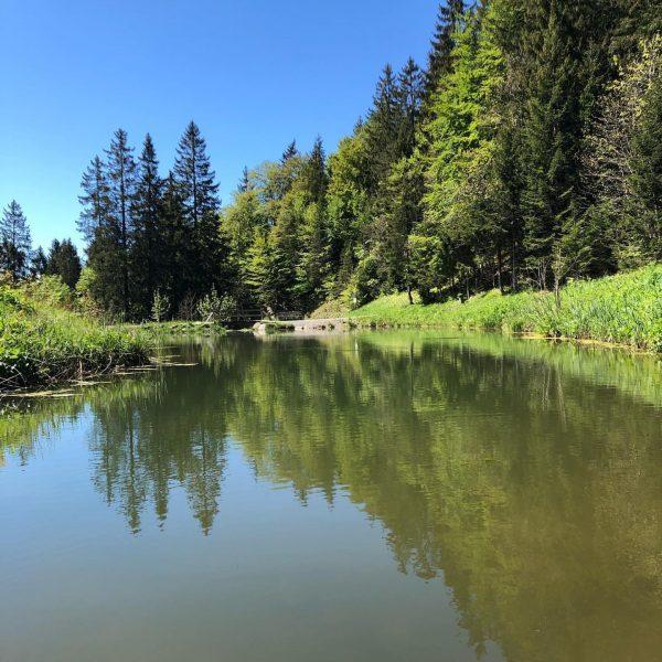 #wandern#wandernvorarlberg #natur #muttersberg