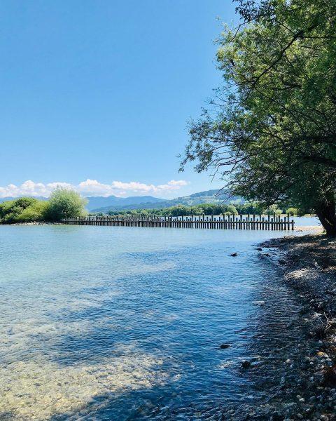 Sommertage am See... Entlang des Alten Rheins ging's heute auf dem Rheinholzweg zum ...